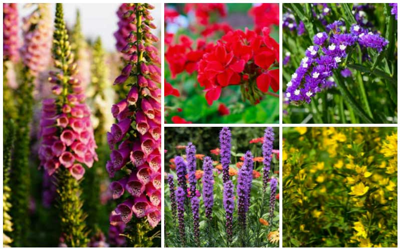 13 Easy Low Care Perennials Garden Lovers Club