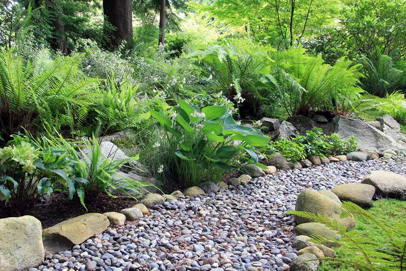 10 Plants For A Shaded Walkway Garden Lovers Club